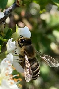 ruche entreprise est un moyen qui permet de favoriser la biodiversité en protègent abeille. Parrainer une ruche pour montrer l'engagement des entreprises